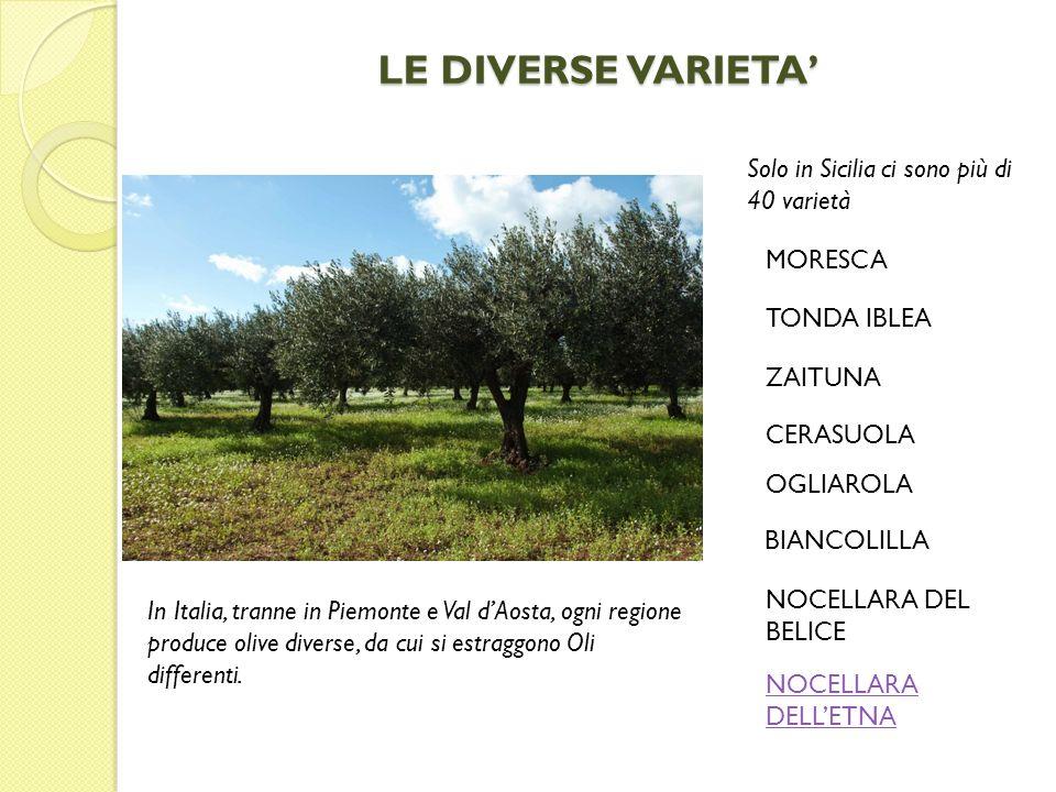 LE DIVERSE VARIETA' Solo in Sicilia ci sono più di 40 varietà MORESCA