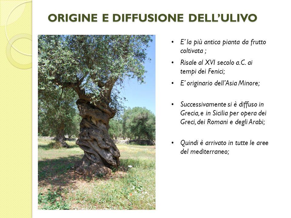 ORIGINE E DIFFUSIONE DELL'ULIVO