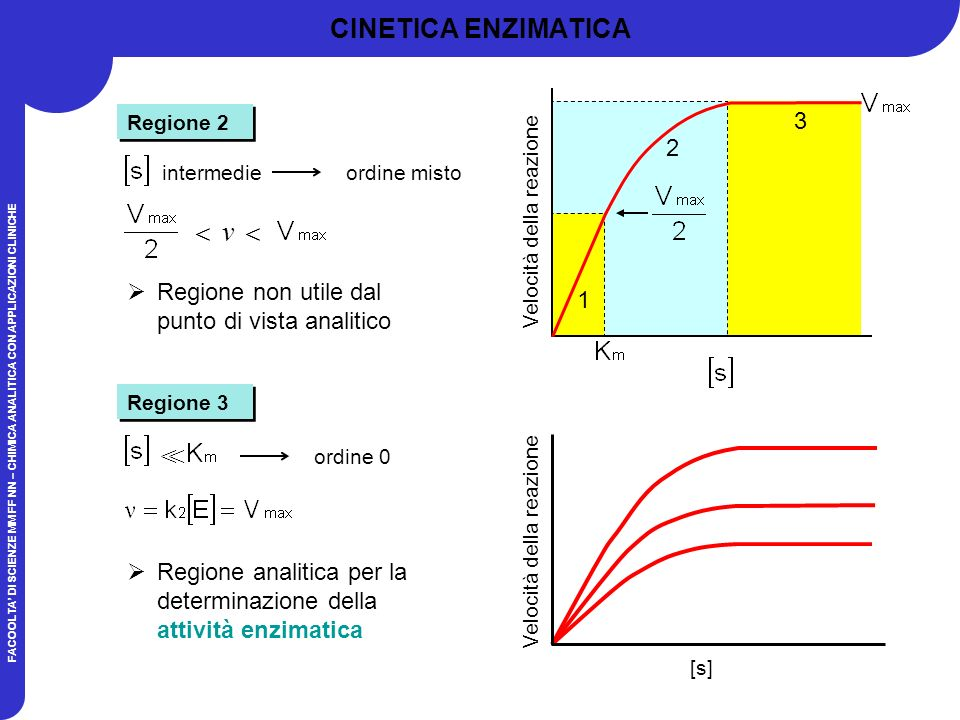 v  > CINETICA ENZIMATICA 3 2
