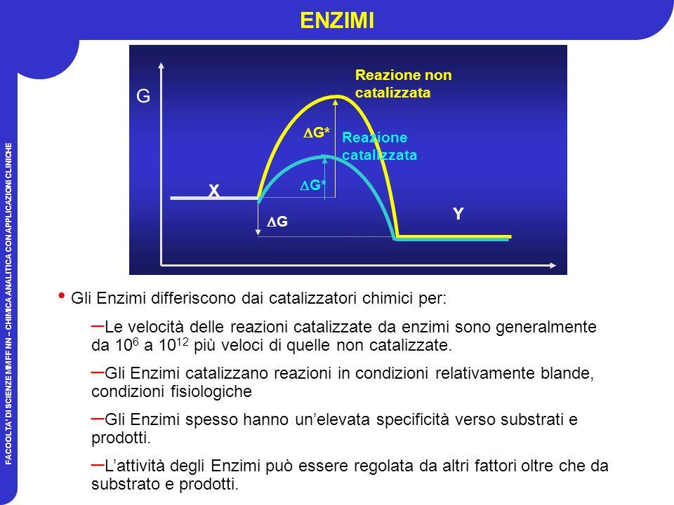 ENZIMI G X Y Gli Enzimi differiscono dai catalizzatori chimici per: