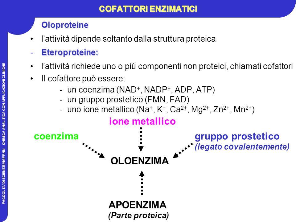 ione metallico coenzima gruppo prostetico OLOENZIMA