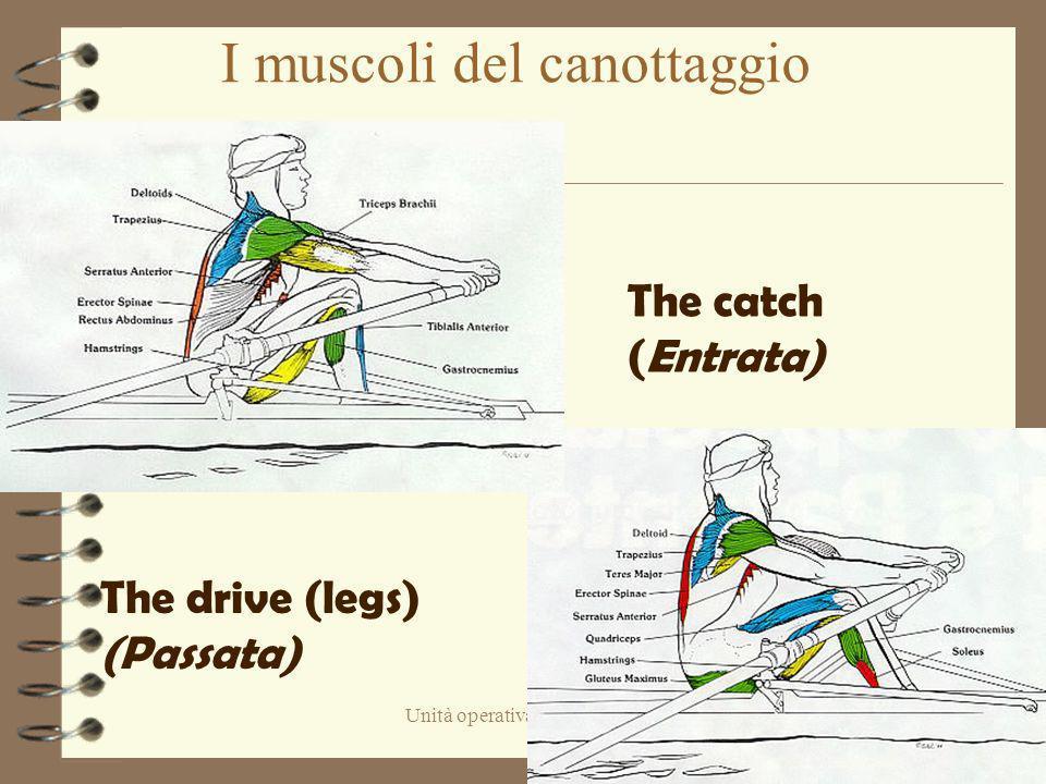 I muscoli del canottaggio