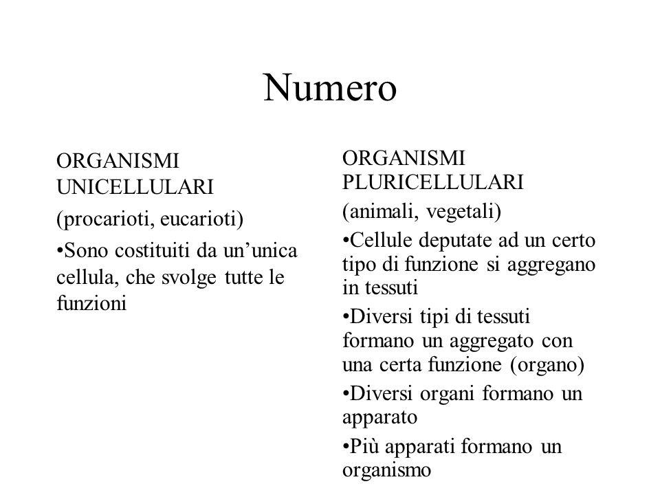 Numero ORGANISMI UNICELLULARI (procarioti, eucarioti)
