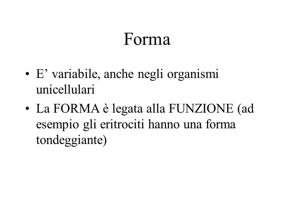 Forma E' variabile, anche negli organismi unicellulari