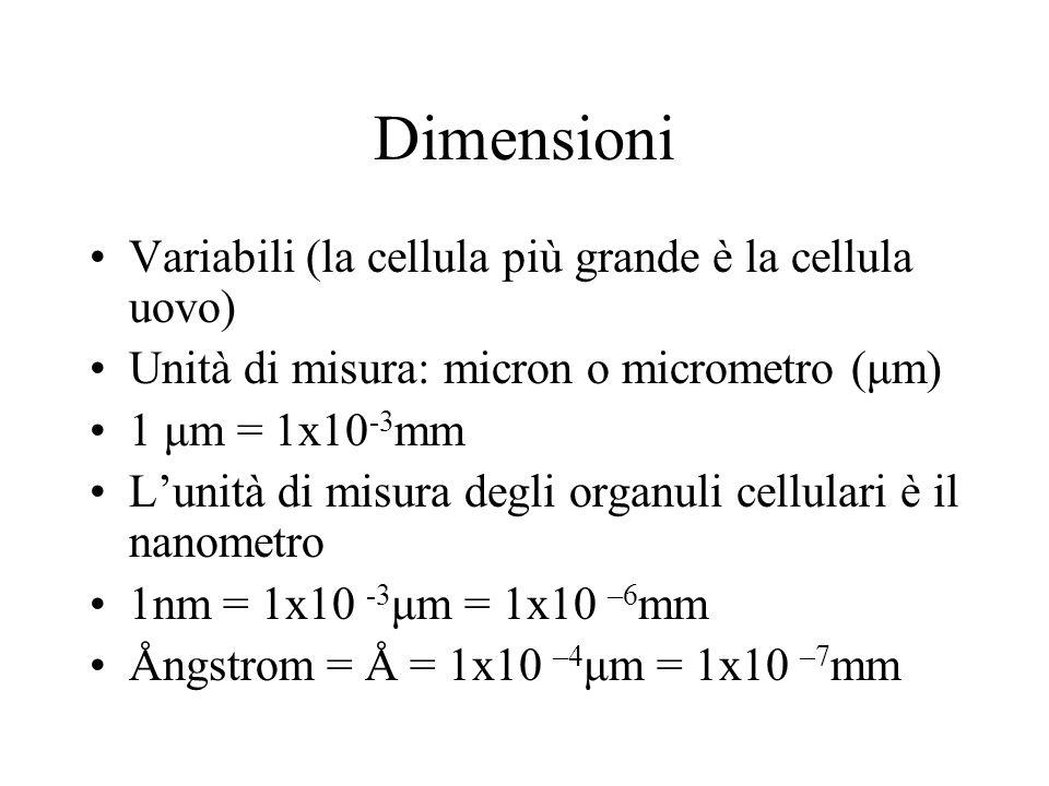 Dimensioni Variabili (la cellula più grande è la cellula uovo)