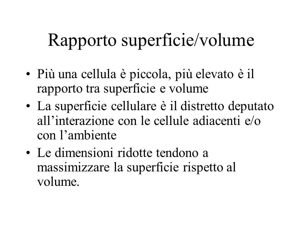 Rapporto superficie/volume