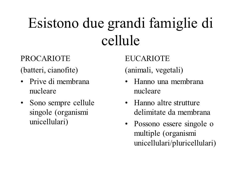 Esistono due grandi famiglie di cellule