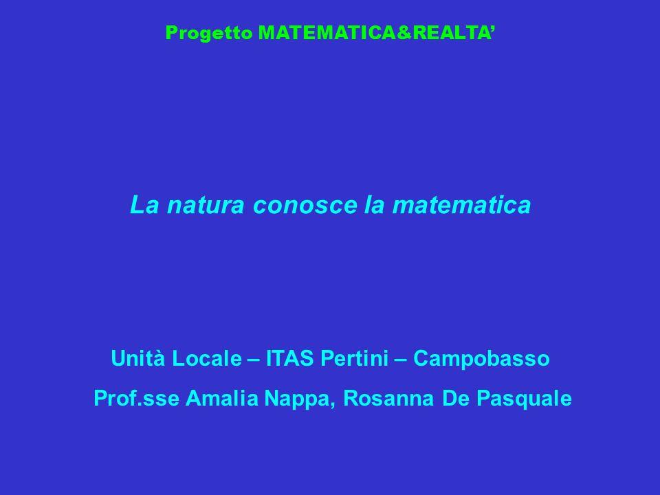 La natura conosce la matematica