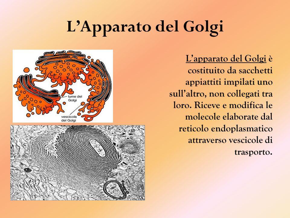 L'Apparato del Golgi
