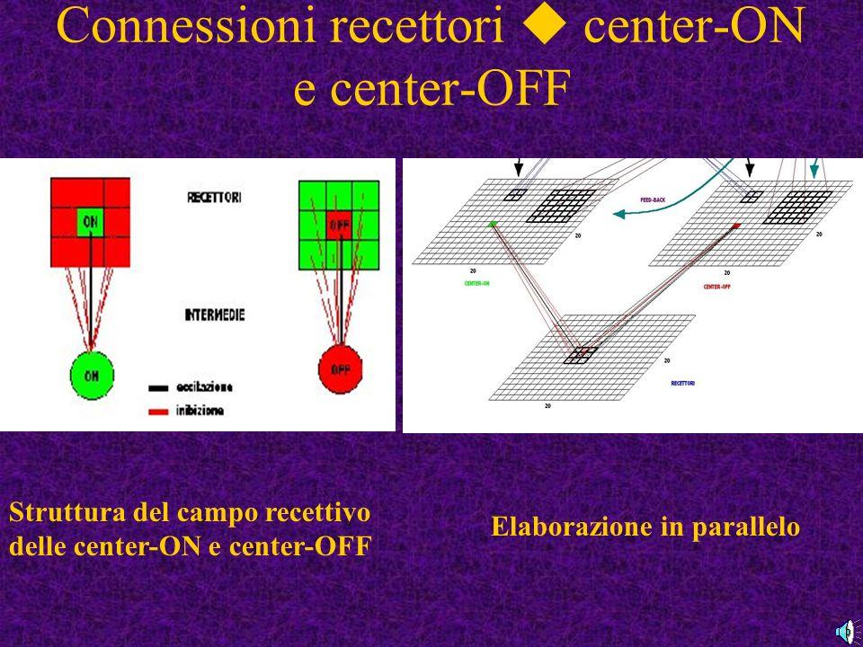 Connessioni recettori  center-ON e center-OFF