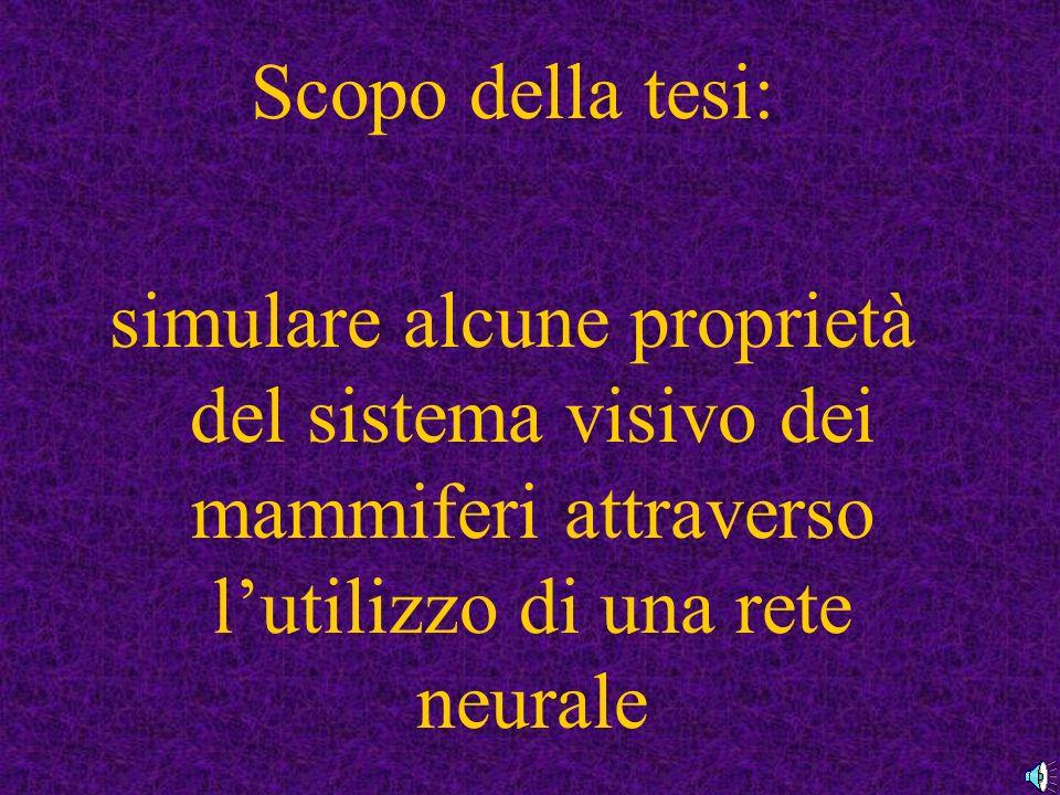 Scopo della tesi: simulare alcune proprietà del sistema visivo dei mammiferi attraverso l'utilizzo di una rete neurale.