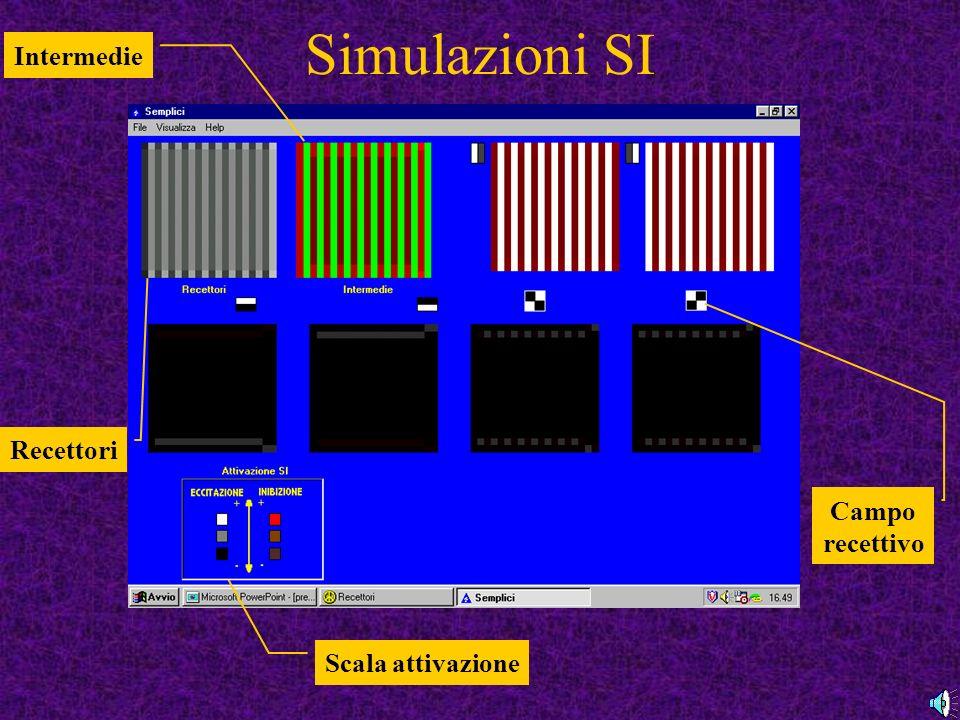 Simulazioni SI Intermedie Recettori Campo recettivo Scala attivazione