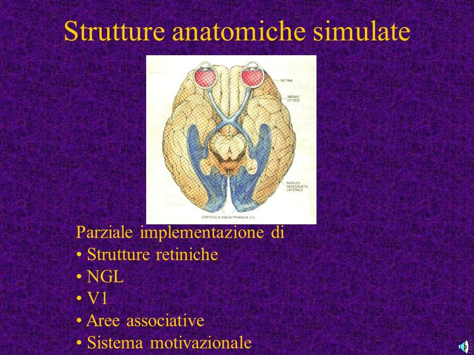Strutture anatomiche simulate