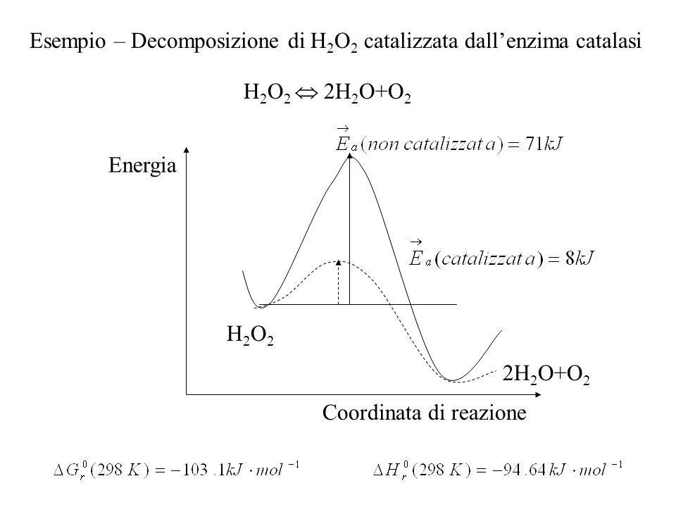 Esempio – Decomposizione di H2O2 catalizzata dall'enzima catalasi