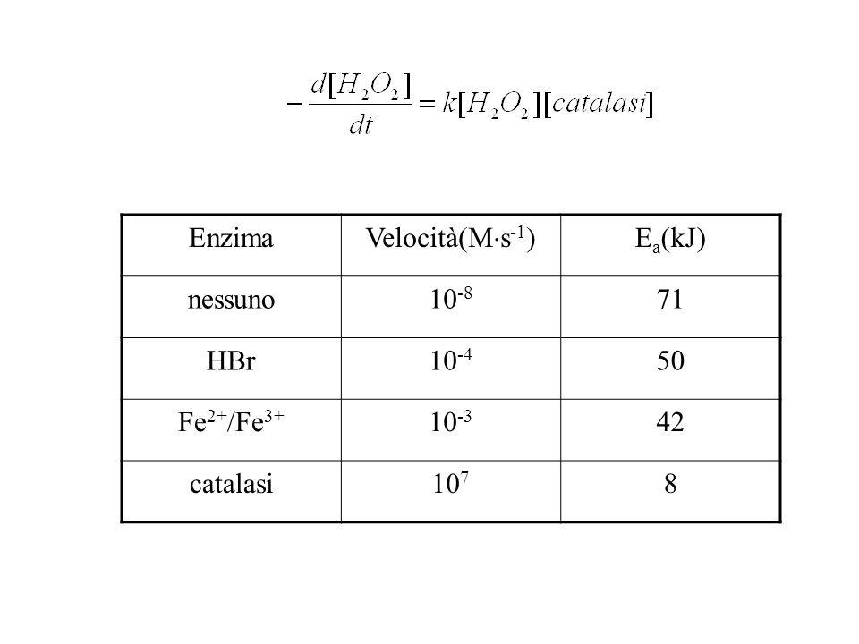 Enzima Velocità(Ms-1) Ea(kJ) nessuno 10-8 71 HBr 10-4 50 Fe2+/Fe3+ 10-3 42 catalasi 107 8