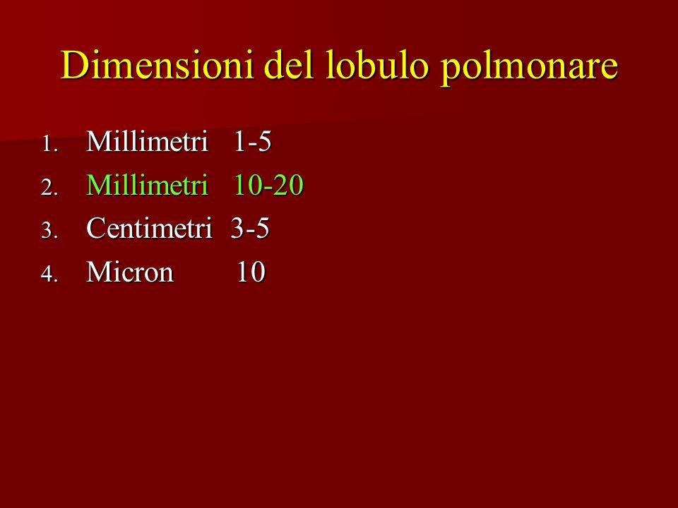 Dimensioni del lobulo polmonare