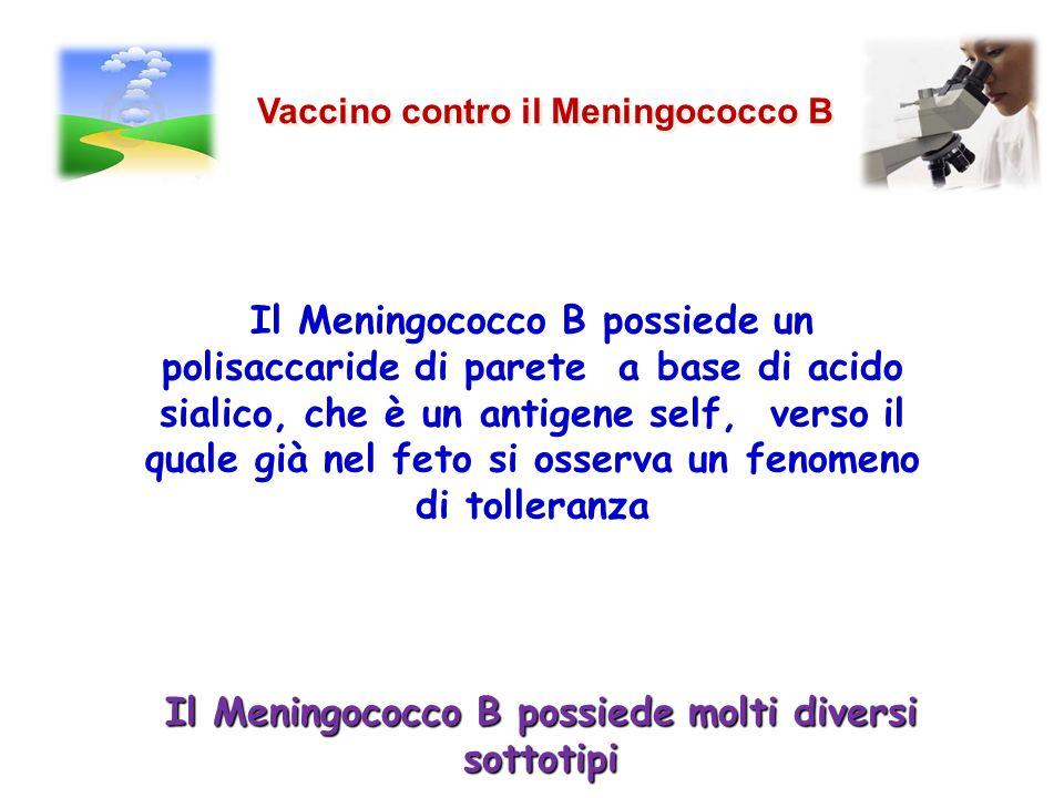 Il Meningococco B possiede molti diversi sottotipi