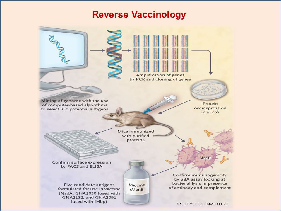Reverse Vaccinology Figure 2. Application of Reverse Vaccinology in Development of a Vaccine. for Group B Neisseria meningitidis Infection.