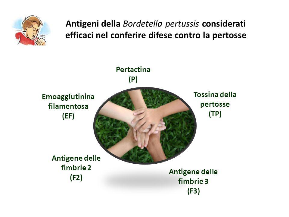 Antigeni della Bordetella pertussis considerati efficaci nel conferire difese contro la pertosse