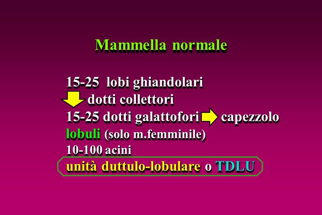 Mammella normale 15-25 lobi ghiandolari dotti collettori