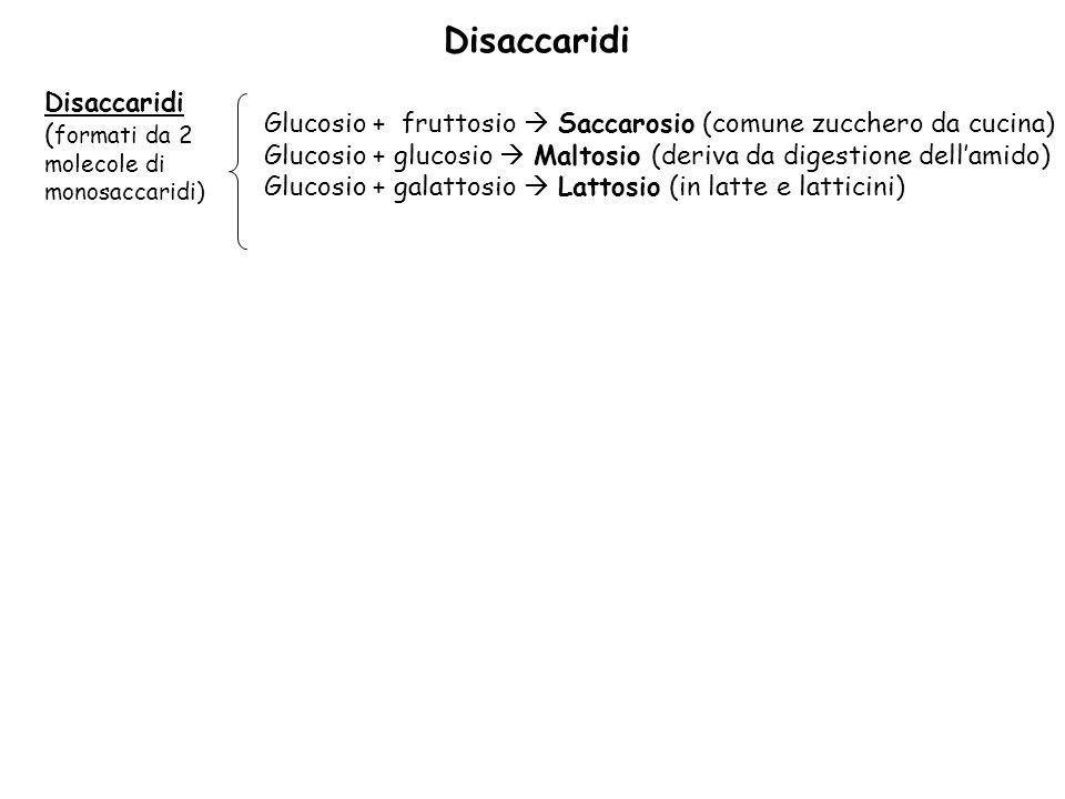 Disaccaridi Disaccaridi (formati da 2 molecole di monosaccaridi)