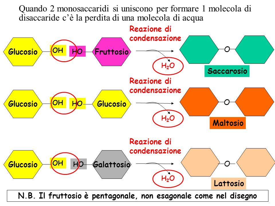 N.B. Il fruttosio è pentagonale, non esagonale come nel disegno