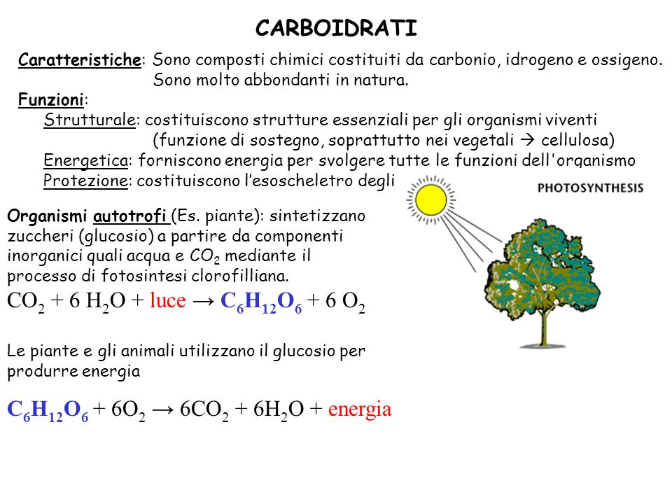 CARBOIDRATI CO2 + 6 H2O + luce → C6H12O6 + 6 O2