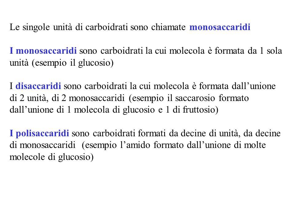 Le singole unità di carboidrati sono chiamate monosaccaridi