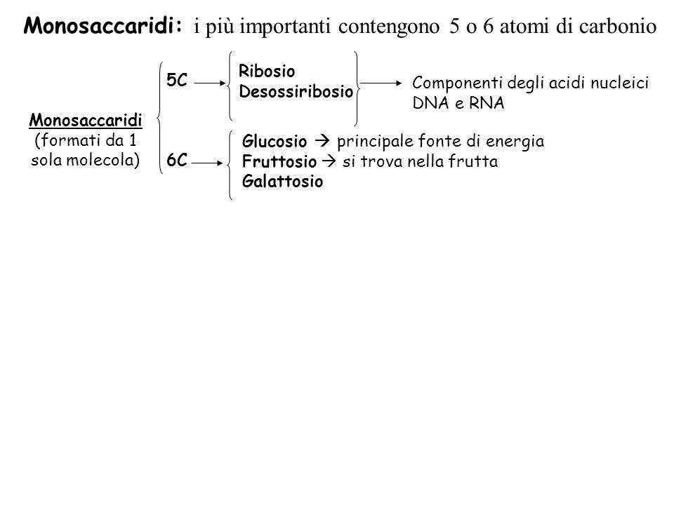 Monosaccaridi: i più importanti contengono 5 o 6 atomi di carbonio