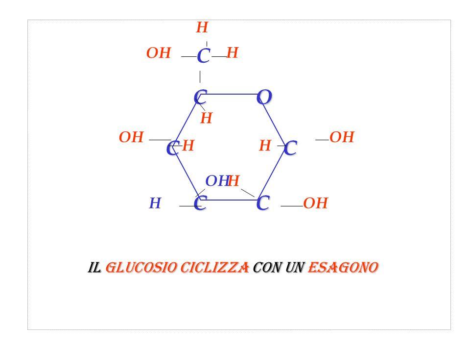 C H OH C O H OH OH H Il glucosio ciclizza con un esagono