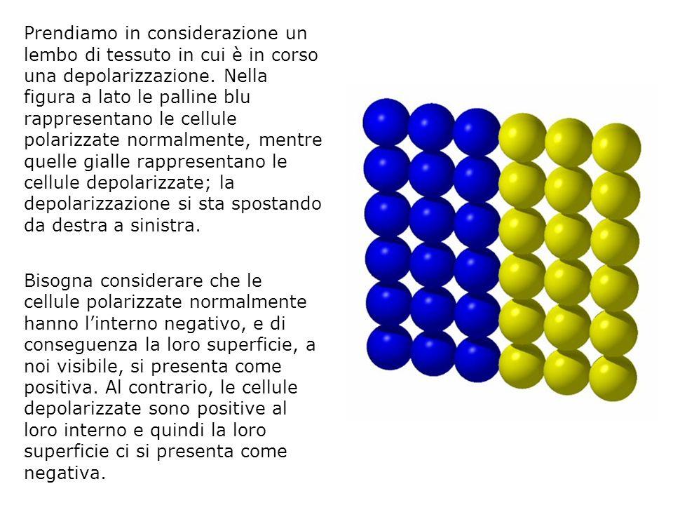 Prendiamo in considerazione un lembo di tessuto in cui è in corso una depolarizzazione. Nella figura a lato le palline blu rappresentano le cellule polarizzate normalmente, mentre quelle gialle rappresentano le cellule depolarizzate; la depolarizzazione si sta spostando da destra a sinistra.