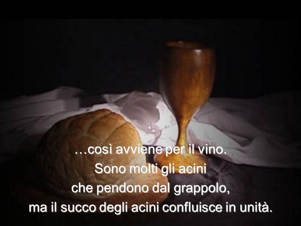 …così avviene per il vino. Sono molti gli acini