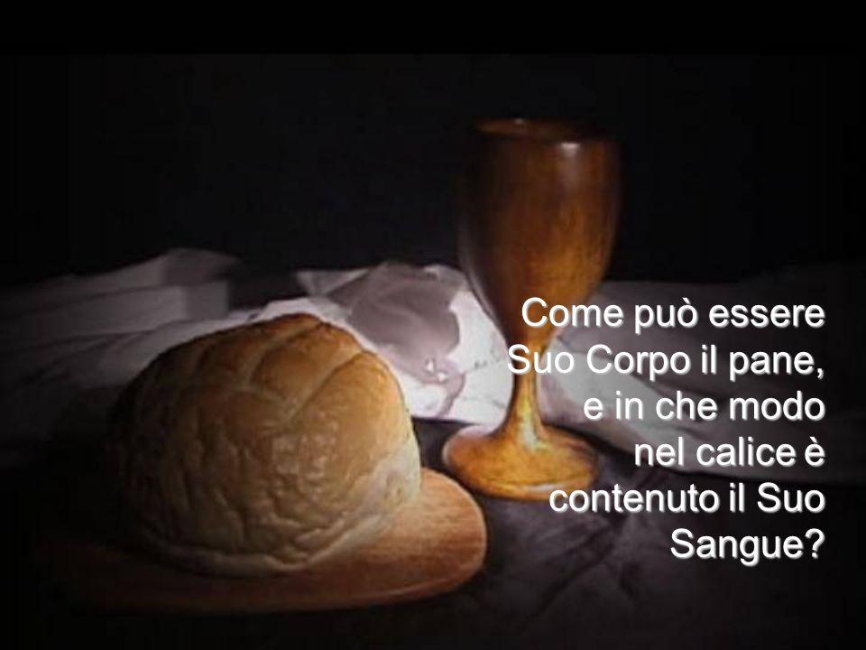 Come può essere Suo Corpo il pane, e in che modo nel calice è contenuto il Suo Sangue