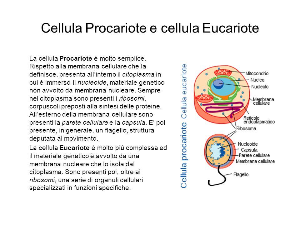 Cellula Procariote e cellula Eucariote
