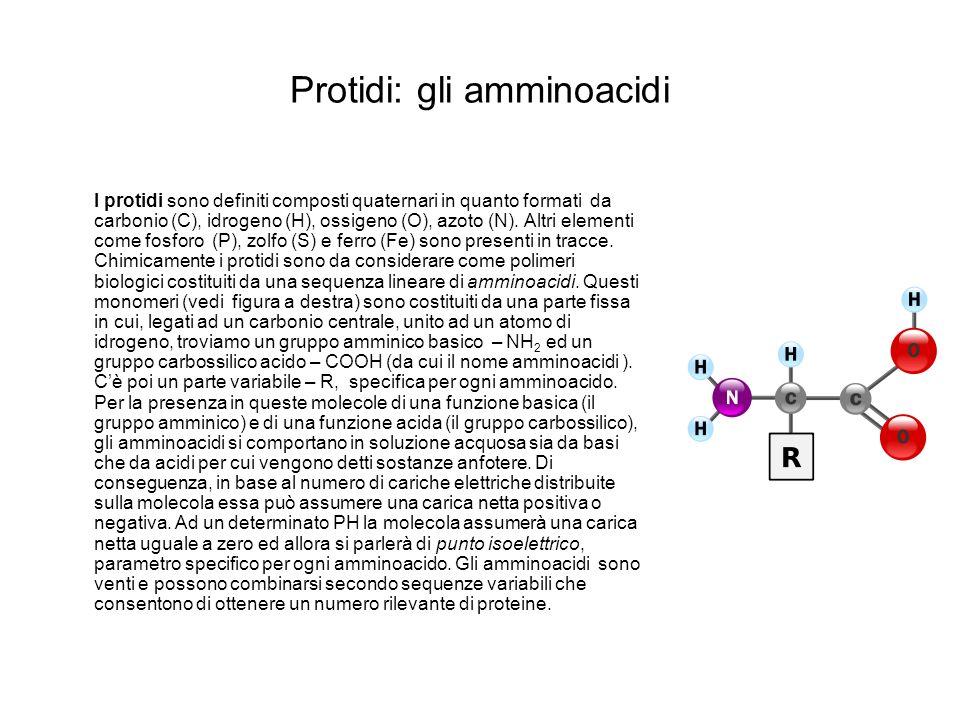 Protidi: gli amminoacidi