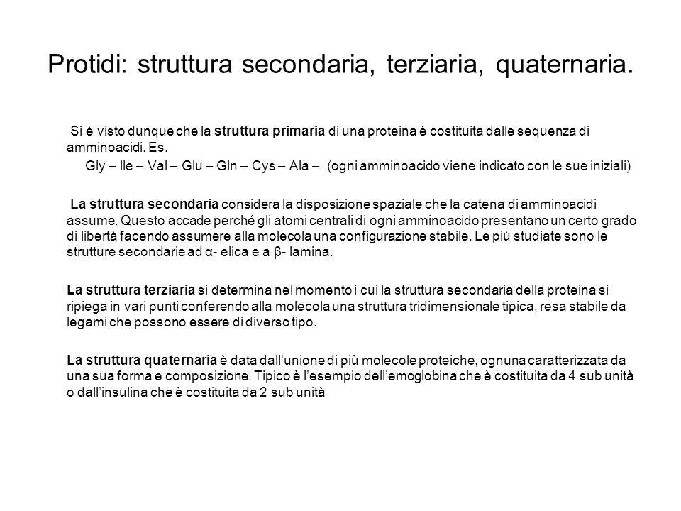 Protidi: struttura secondaria, terziaria, quaternaria.