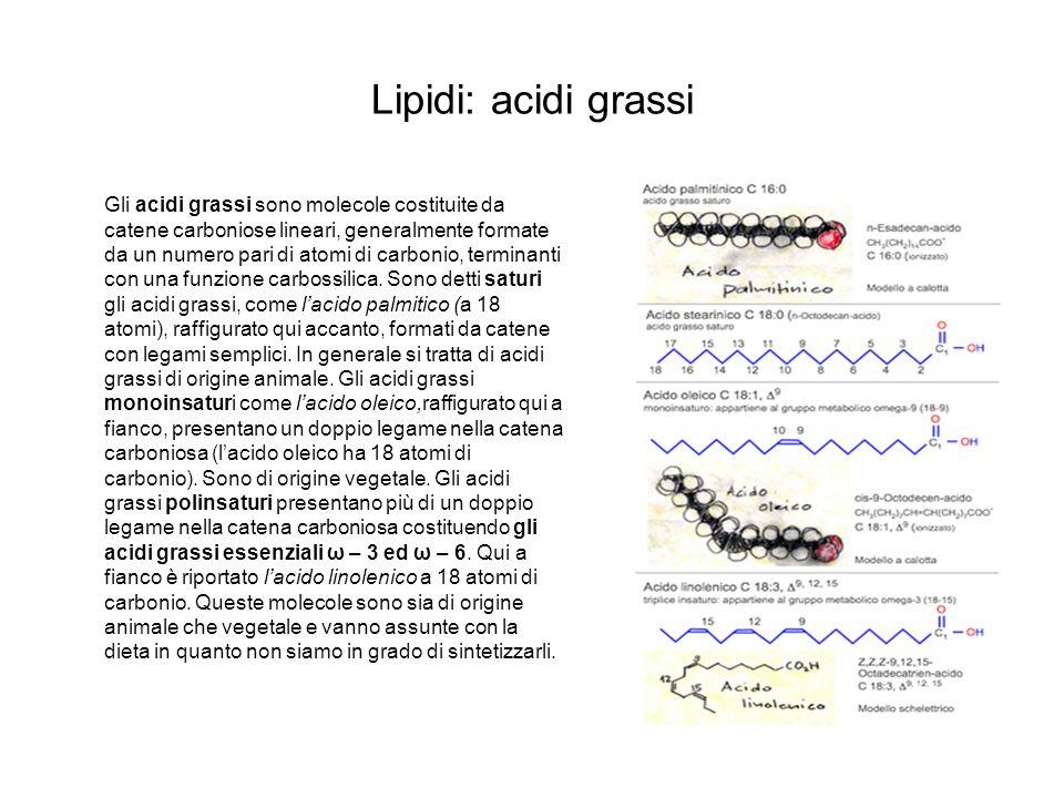 Lipidi: acidi grassi