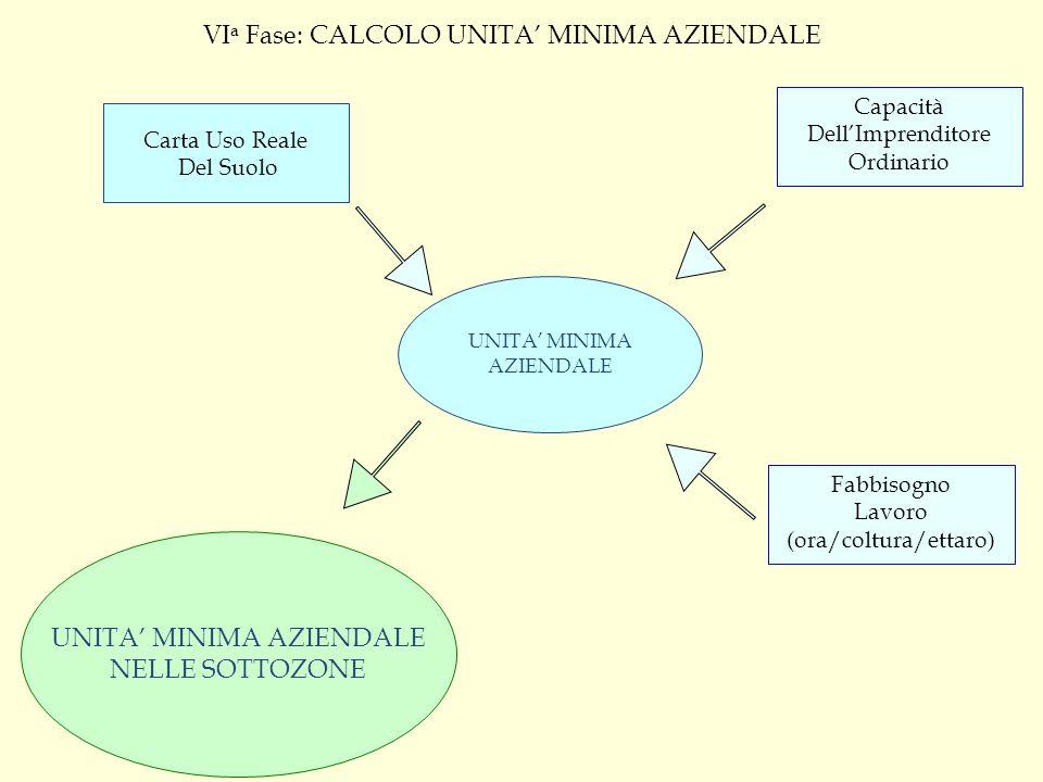 VIa Fase: CALCOLO UNITA' MINIMA AZIENDALE