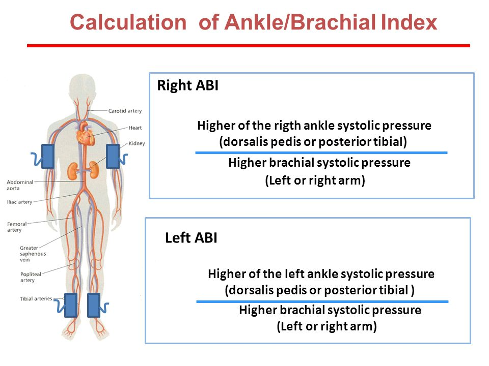 Calculation of Ankle/Brachial Index