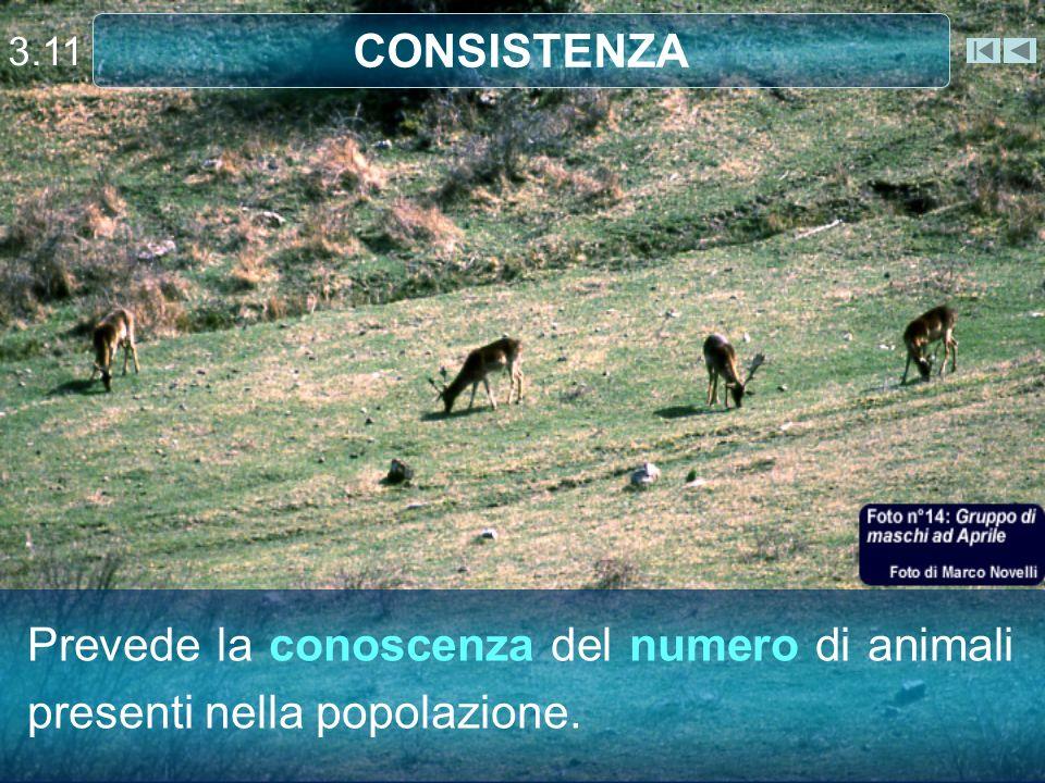 3.11 CONSISTENZA Capriolo Prevede la conoscenza del numero di animali presenti nella popolazione.