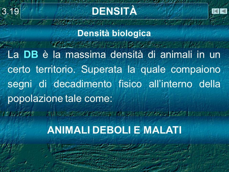 ANIMALI DEBOLI E MALATI