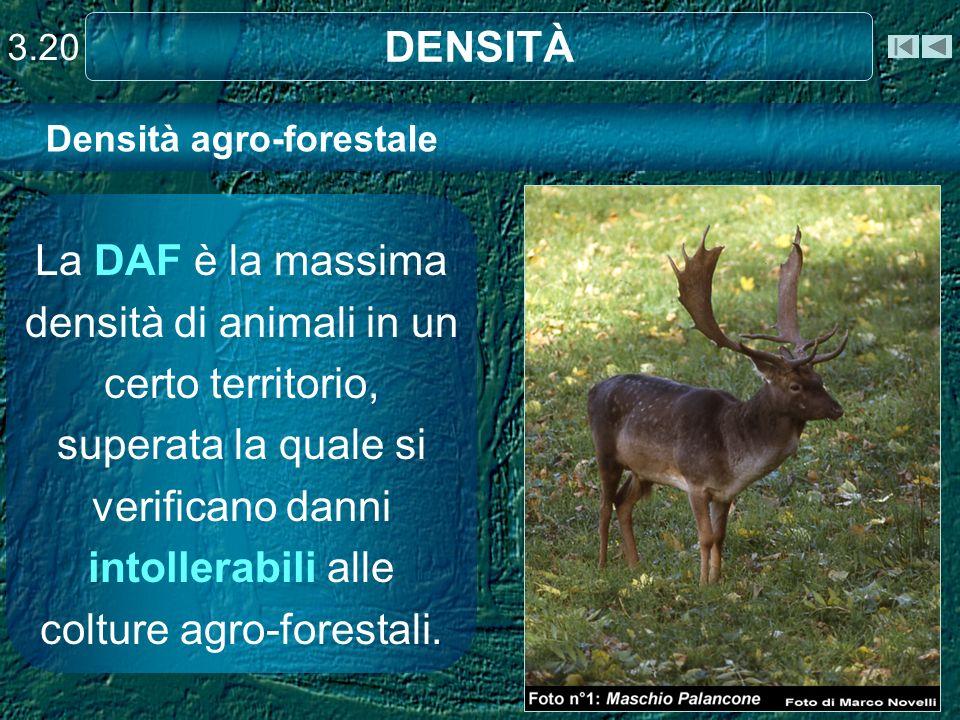 Densità agro-forestale