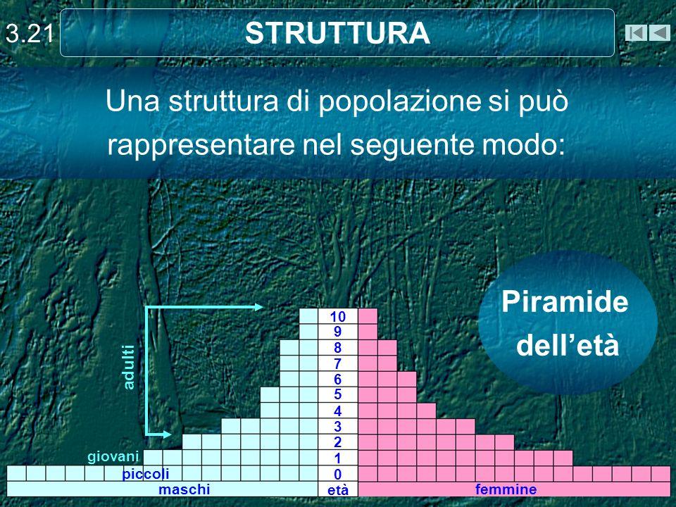 Una struttura di popolazione si può rappresentare nel seguente modo: