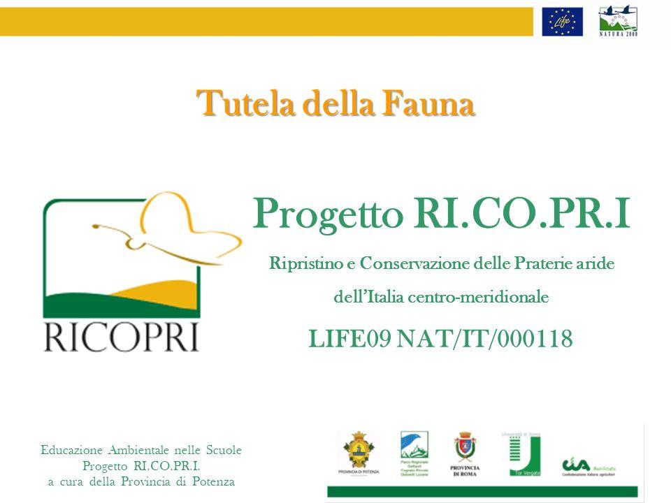 Progetto RI.CO.PR.I Tutela della Fauna LIFE09 NAT/IT/000118