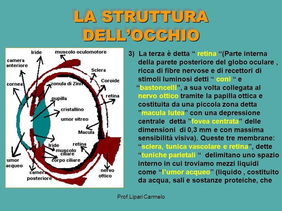 LA STRUTTURA DELL'OCCHIO
