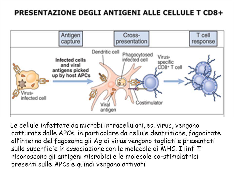 Le cellule infettate da microbi intracellulari, es virus, vengono catturate dalle APCs, in particolare da cellule dentritiche, fagocitate all'interno del fagosoma gli Ag di virus vengono tagliati e presentati sulla superficie in associazione con le molecole di MHC. I linf T riconoscono gli antigeni microbici e le molecolae costimolatrici presenti sulle APCs e quindi vengono attivato