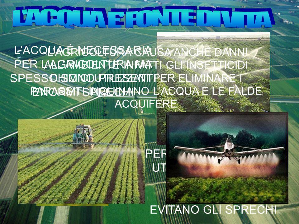 L ACQUA E FONTE DI VITA L'ACQUA È NECESSARIA PER L'AGRICOLTURA MA SPESSO SONO PRESENTI ENORMI SPRECHI.