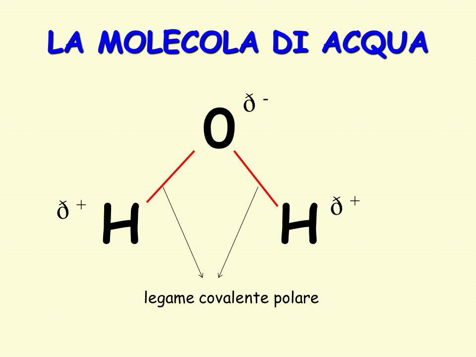 LA MOLECOLA DI ACQUA ð - H H ð + ð + legame covalente polare