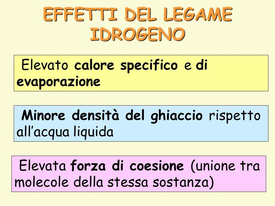 EFFETTI DEL LEGAME IDROGENO