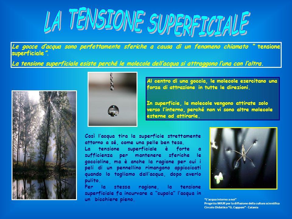 LA TENSIONE SUPERFICIALE